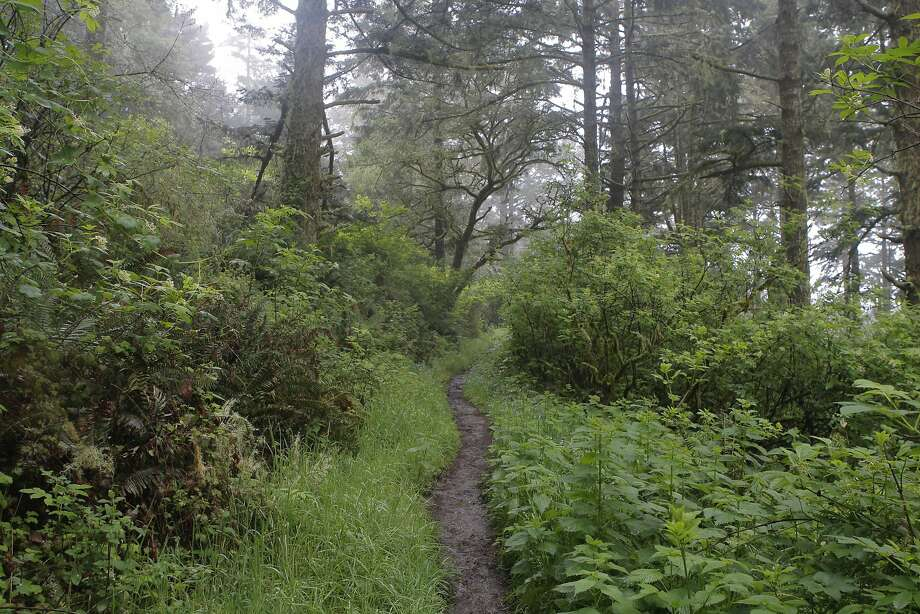 On foggy or wet days, Inverness Ridge can feel like rain forest jungle in Kauai, not Point Reyes National Seashore in western Marin Photo: Tom Stienstra, Tom Stienstra / The Chronicle