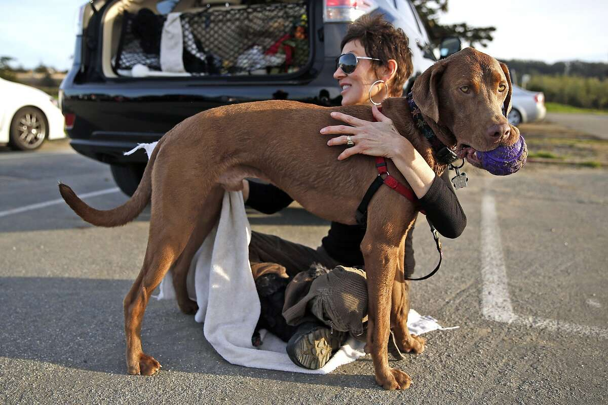 Theresa Marks dries off her dog, Jackson, in the Crissy Field parking lot in San Francisco, Calif., on Monday, February 22, 2016.