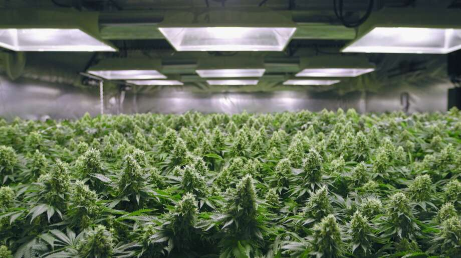 "A grow room resembles a tiny, lush forest in a scene from ""Rolling Papers."" Photo: Alchemy"