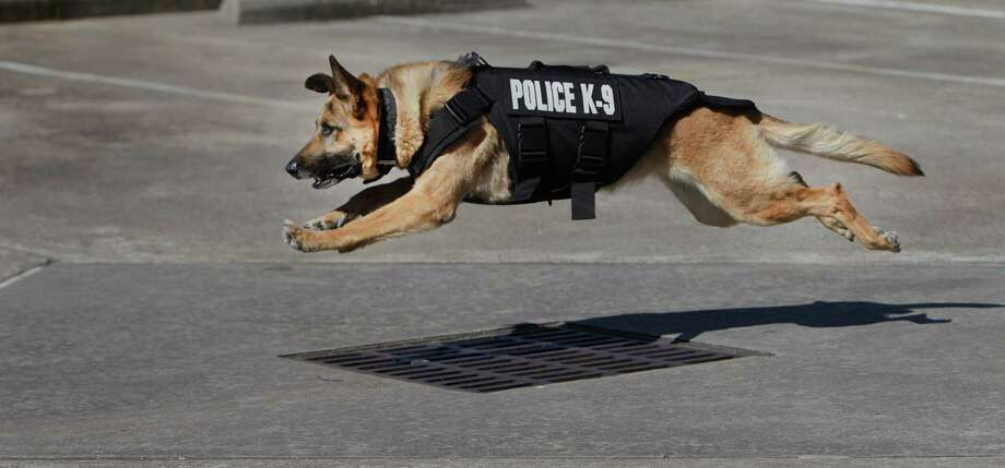 Thanks to ananonymous sponsor and the nonprofitVested Interest in K9s Inc.,Richmond K9 Officer Jackie received  a bullet/stab proof vest on Wednesday. Photo: Steve Gonzales, Houston Chronicle / © 2016 Houston Chronicle