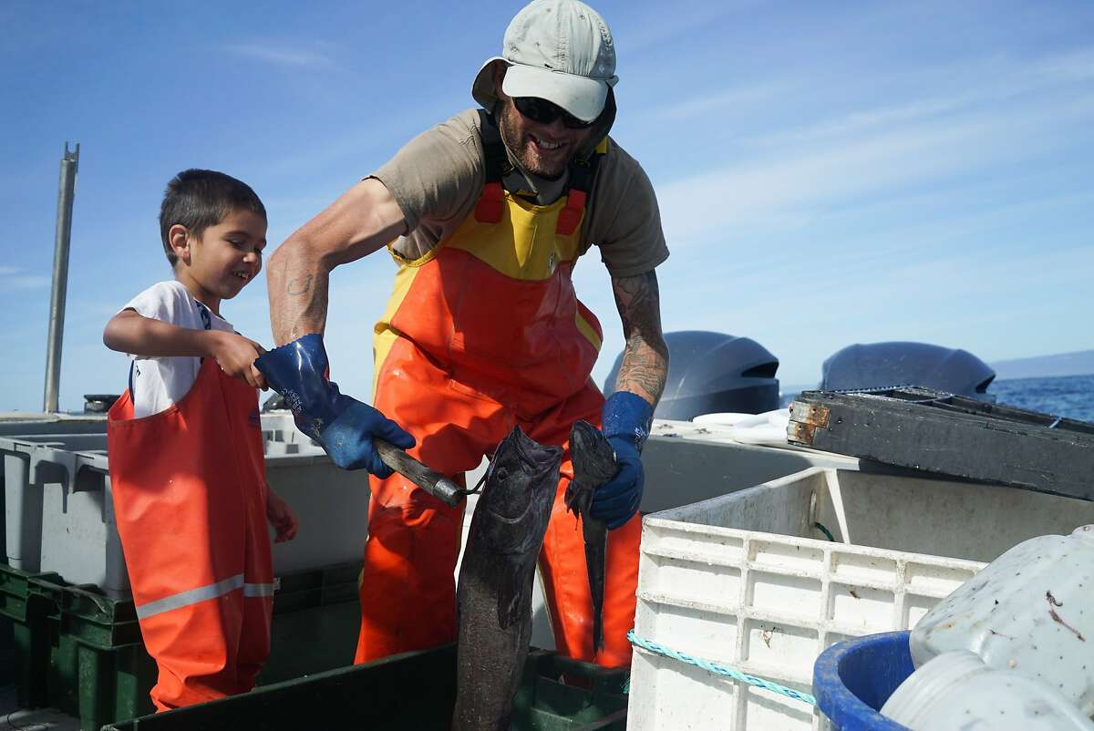 Calder Deyerle and his son Miles move sablefish to the ice box in Moss Landing, Calif. on Monday, February 22, 2016. Deyerle practices sustainable fishing.