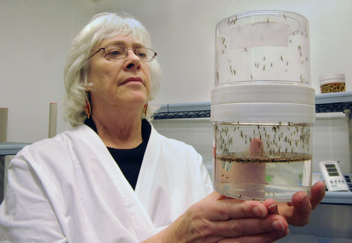 Research scientist Laura Kramer holds a container of live mosquitos in the insectary at NYS Health Department's Griffin Laboratory on State Farm Road Thursday, Jan.31, 2013, in Slingerlands, N.Y. (Lori Van Buren / Times Union archive)