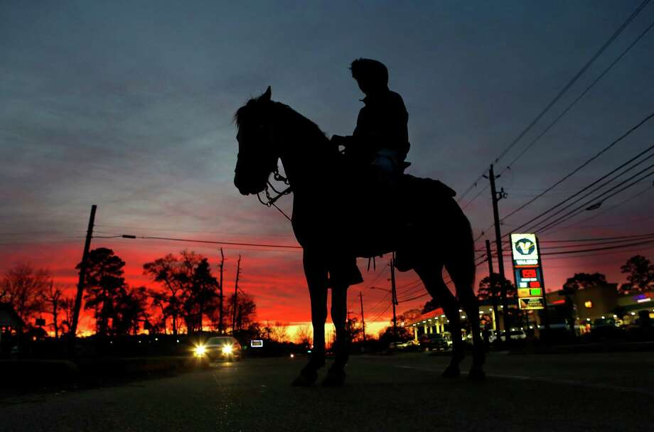 Seventeen year-old Cletis Love waits for cars to pass while crossing Tidwell Road on his three year-old stud, Money, Wednesday evening, Jan. 27, 2016, in Houston. Cletis is preparing himself and Money for the upcoming Houston Livestock Show and Rodeo trail ride. Photo: Mark Mulligan, Houston Chronicle / © 2016 Houston Chronicle