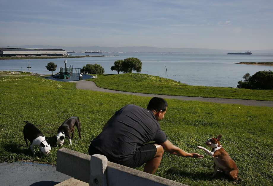 Min Min Nyunt gets a high five from his dog Yoyo as Bobo, left, and Toto eat grass nearby at India Basin Shoreline Park Feb. 24, 2016 in San Francisco. Photo: Leah Millis, The Chronicle