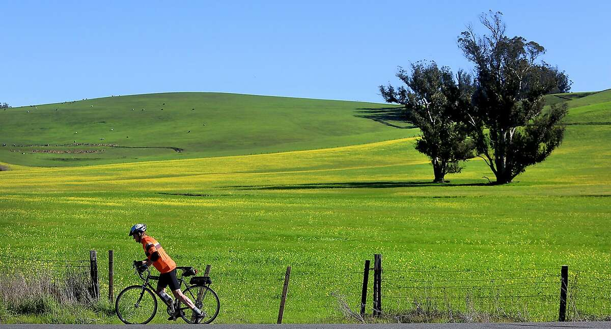 Don Coursey of Ukiah, Ca., USA begins his ride again after stopping to admire the scenery at Walker and Pepper Roads in west Sonoma County, Monday Feb. 8, 2016. El Nino rains have turned Sonoma County's mid-winter hills green with hues of yellow mustard for the first time in years. (Kent Porter/The Press Democrat via AP)
