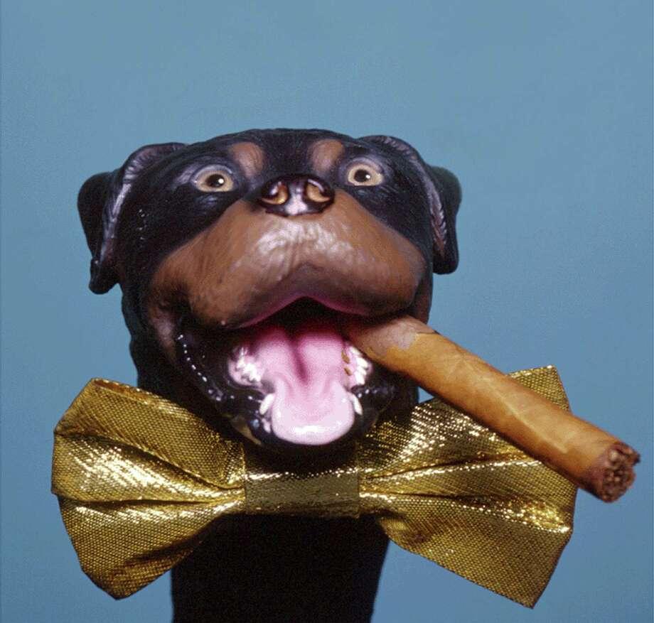 Triumph the Insult Comic Dog Photo: HO / NBC
