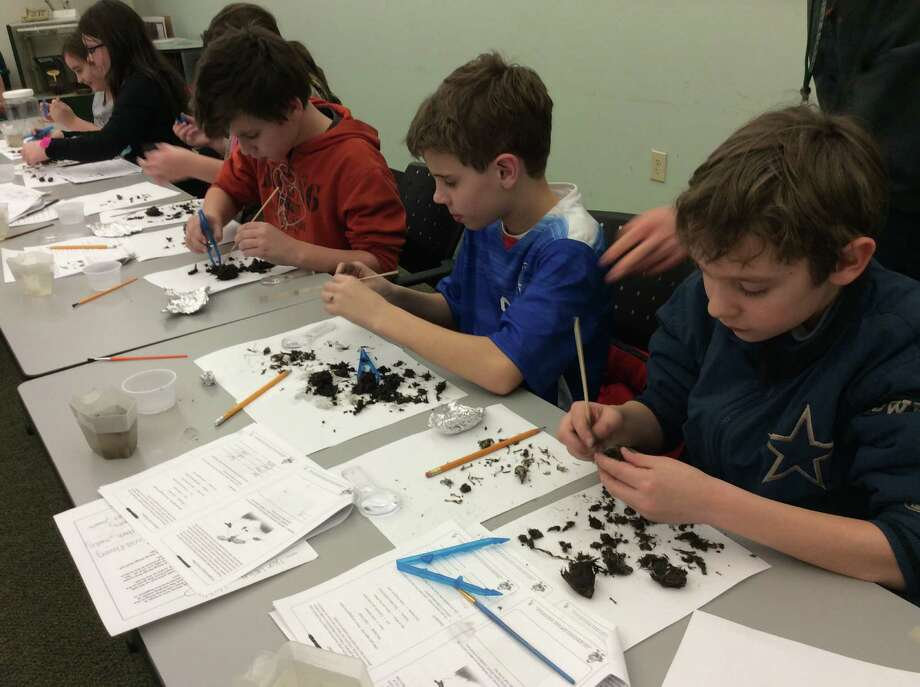 Windham-Ashland-Jewett Science Cub Students busy at work dissecting owl pellets, furthering their knowledge of food webs and digestive systems. (Linda Tripp, Cornell Cooperative Extension)