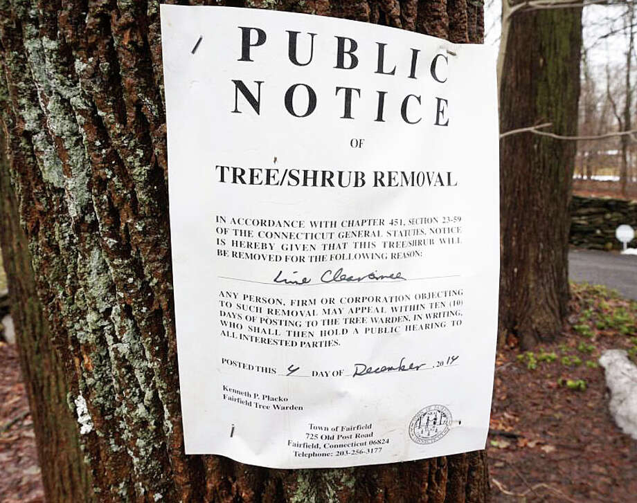 Trees slated to be pruned or taken down as part of United Illuminating's tree-management program, under a pilot initiative launched in 2015, were posted along Burr Street last March. Photo: File Photo / Fairfield Citizen