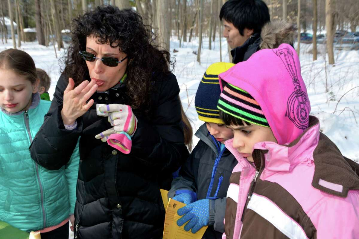 Sampling maple syrup is one of the highlights of the Maple Sugar Festival at the Stamford Museum and Nature Center on the weekend of March 5-6.