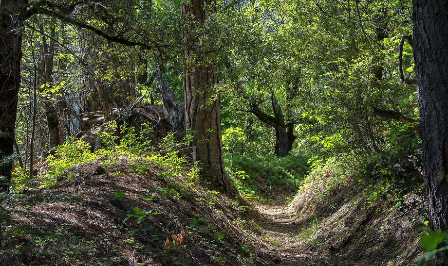 Calaveras Big Trees State Historic Park. Photo: Alan Beymer