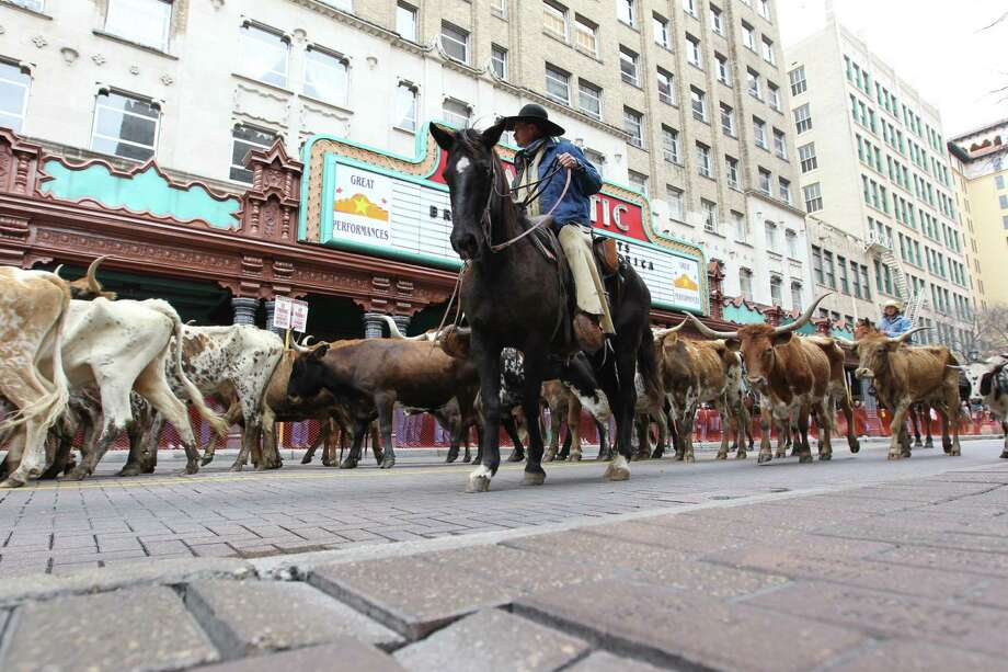 The San Antonio Stock Show and Rodeo and the San Antonio Convention and Visitors Bureau partnered for the Western Heritage Parade and Cattle Drive. The CVB would become a public/private entity under plans being considered by city officials. Photo: Kin Man Hui /San Antonio Express-News / San Antonio Express-News