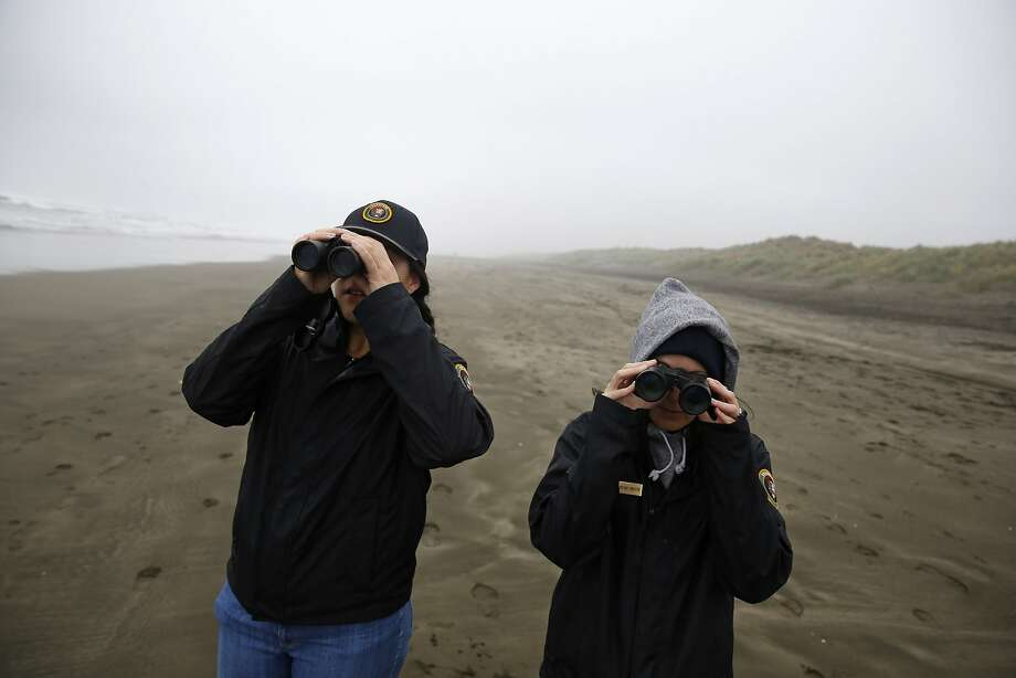 Veronica Hurd (left) and Brittany Livingston, Golden Gate National Recreation Area wildlife monitoring interns, look for Western snowy plovers on Ocean Beach, where 104 of the threatened shorebirds were spotted in a single day in January. Photo: Lea Suzuki Lea Suzuki, The Chronicle