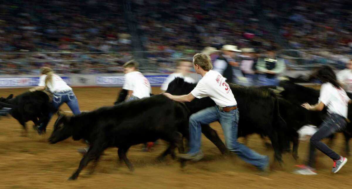 Scramblers rush after the calves during the calf scramble at the Houston Livestock Show and Rodeo Wednesday, March 4, 2015, in Houston. ( Jon Shapley / Houston Chronicle )