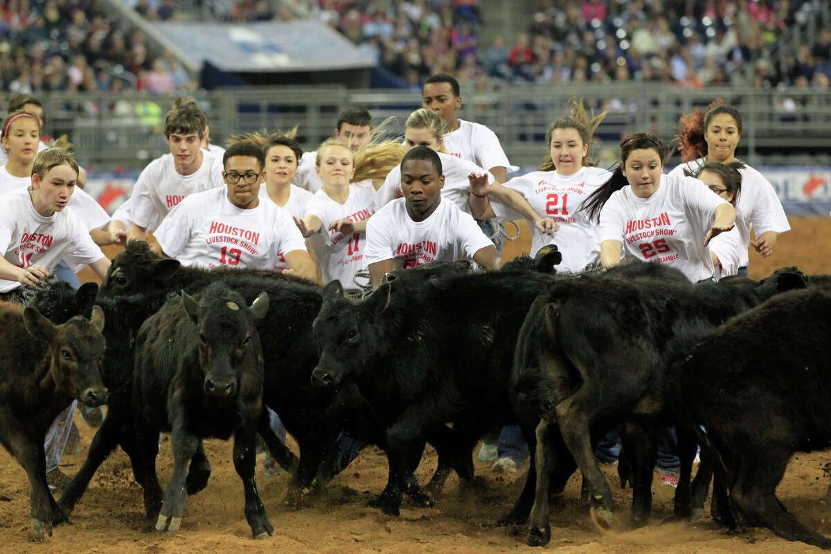 Children participate in the Calf Scramble event during Rodeo Houston at the Houston Livestock Show and Rodeo at Reliant Stadium Thursday, March 6, 2014, in Houston. ( Johnny Hanson / Houston Chronicle )