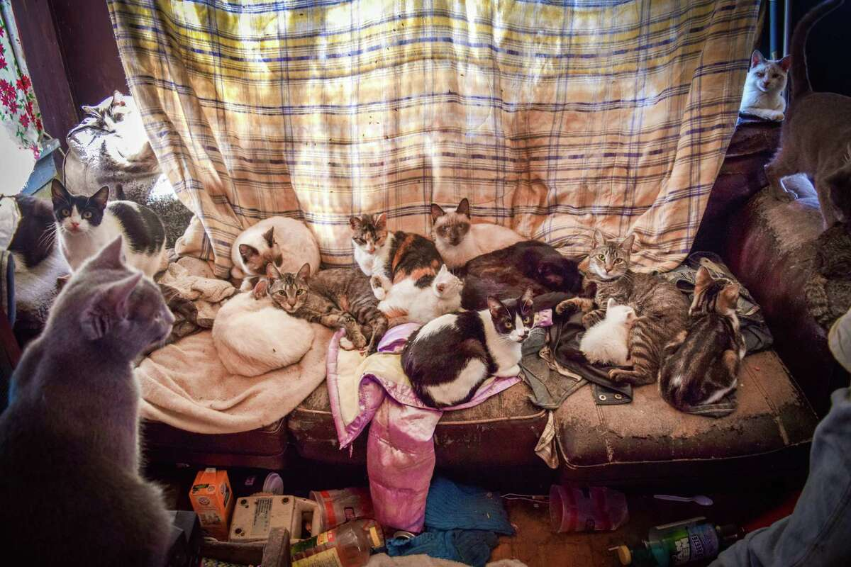 108 cats were siezed from an 1,100-square-foot home in Vernon, Texas, on Feb. 25, 2016.