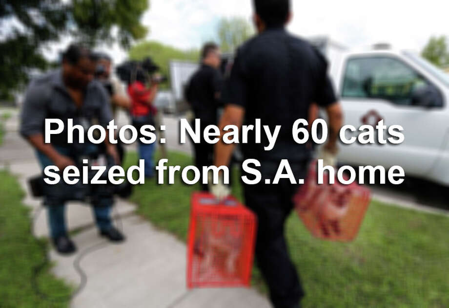Click through the gallery to see photos from inside and outside a home in San Antonio where nearly 60 cats were seized on November 5, 2015. / ©2015 San Antonio Express-News