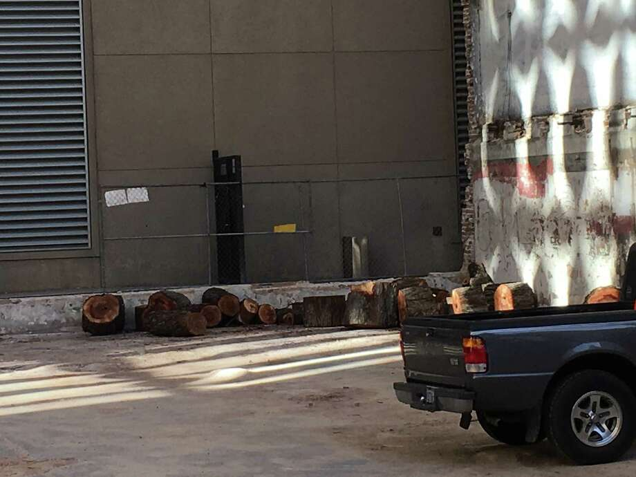 The old pecan tree behind the Lancaster Hotel has been removed. Photo: Houston Chronicle