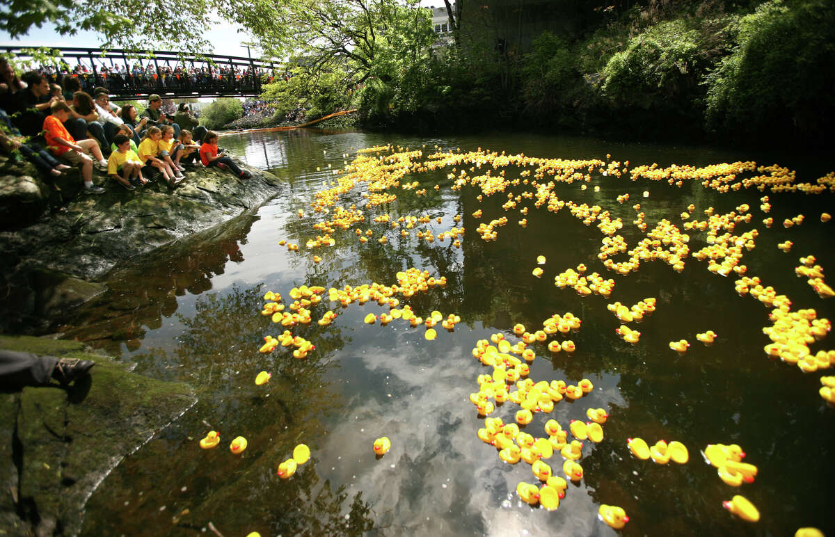 Spectators look on as thousands of numbered rubber ducks float down the Wepawaug River during the annual Milford Harbor Duck Race on Sunday, May 6, 2012. The event, which was to be a fundraiser for the St. Gabriel School this year, was canceled because the school is set to close soon.