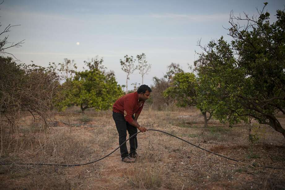 Sanjeev checks the irrigation system that he recently installed in his plantation. Photo: Photographer: Bernat Parera