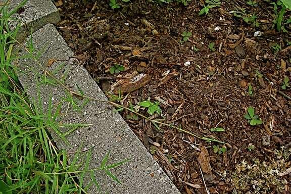 Bermuda grass creeps into a summer raised bed.