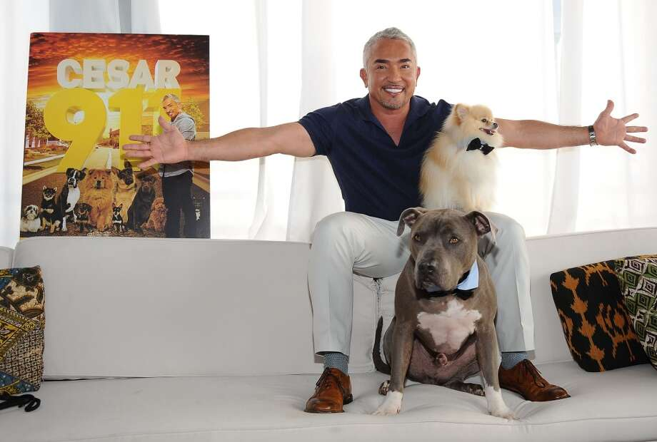 Dog behaviorist Cesar Millan  is working with audiobook company, Audible, to recommend audiobooks to play for dogs while owners are away from home.If you'd rather not leave your pet at home, scroll through the slideshow for a look at which workplaces will welcome your dog at your desk. Photo: Getty Images