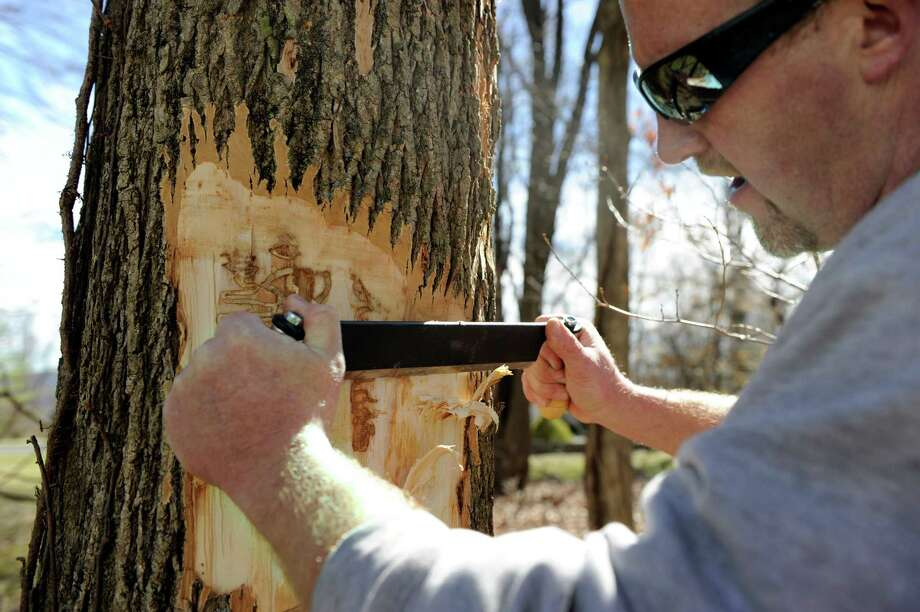 Matt Bartelme strips away bark on an ash tree to expose evidence of an infestation of emerald ash borer, a tree-killing pest, at a Danbury home. Photo: Carol Kaliff / Hearst Connecticut Media / The News-Times