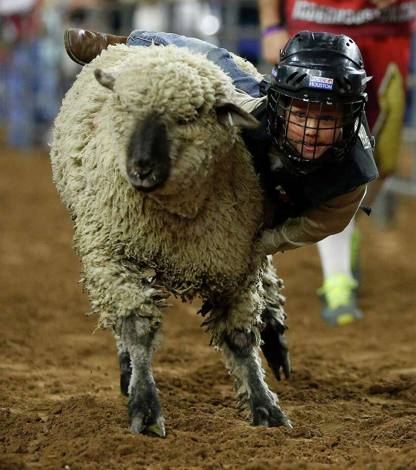 Beau Farris, 5, of Ganado Texas rides a sheep during the Mutton Bustin' event at the Houston Livestock Show and Rodeo at NRG Stadium, Friday, March 11, 2016. Photo: Karen Warren, Houston Chronicle / © 2016  Houston Chronicle