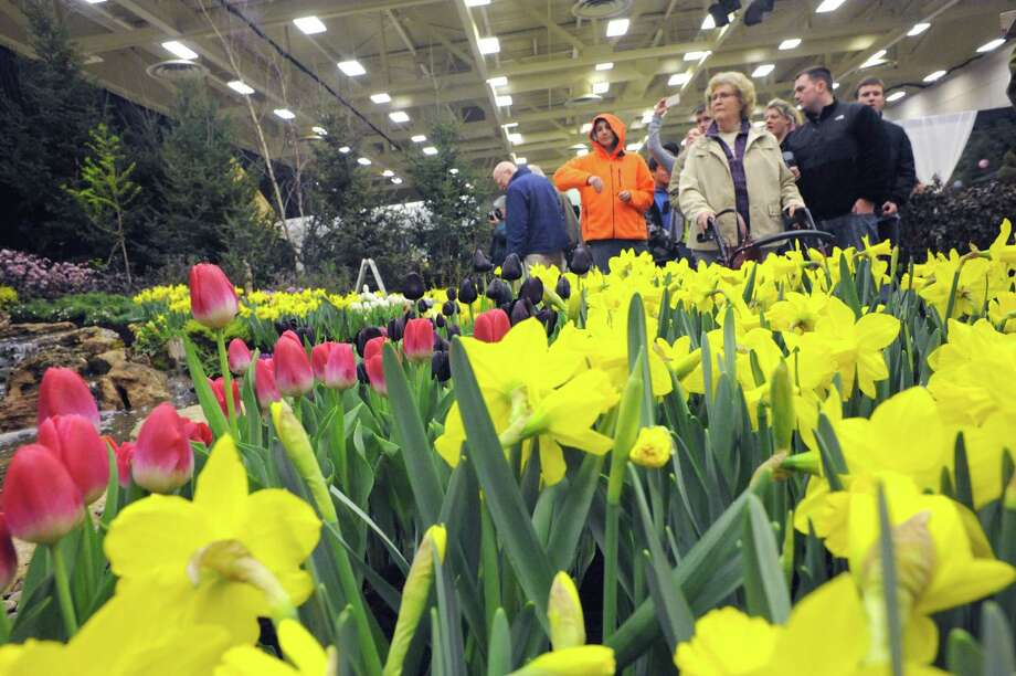 Flowers in bloom, though inside, at the Decker's Landscape and Aquatics display during the Capital District Garden and Flower Show Friday morning, March 21, 2014, at Hudson Valley Community College in Troy, N.Y. (Michael P. Farrell/Times Union) Photo: Michael P. Farrell / 00026229A