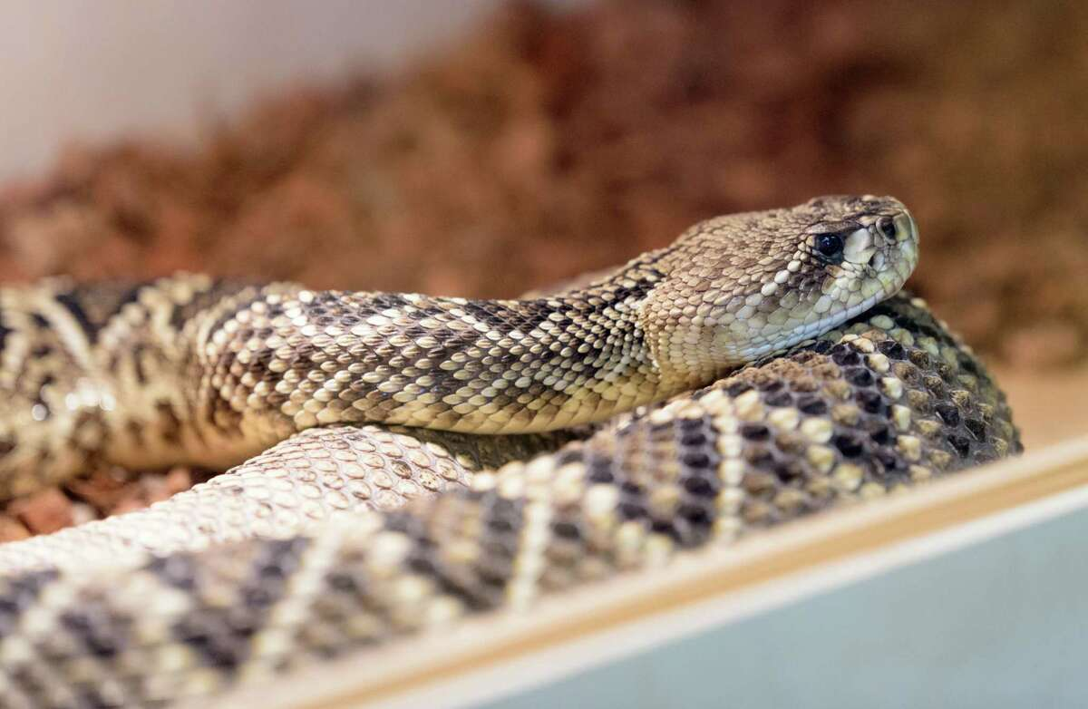 Click through to see a list of the most venomous animals in Texas.
