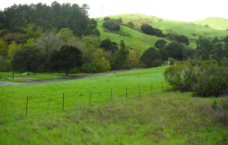 With a permit, the public can gain access to vast watershed lands in the East Bay hills managed by the East Bay Municipal Utility District. After recent heavy rains, the hills are aglow in electric greens.