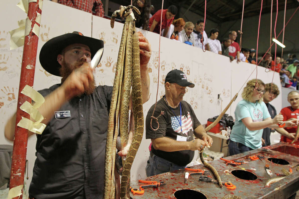 Red Hurd II, left, skins a western diamondback rattlesnake at the skinning station at the 58th annual Sweetwater Jaycee's World's Largest Rattlesnake Round-Up on Saturday, March 12, 2016, at the Nolan County Coliseum in Sweetwater, Texas.