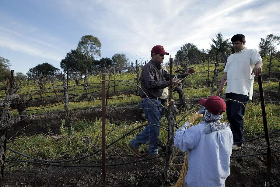 Chuy Ordaz (left), owner of Palo Alto Vineyard Management and his son, Chuy Jr. (right) check on a vineyard he manages in Glen Ellen. Photo: Carlos Avila Gonzalez, The Chronicle