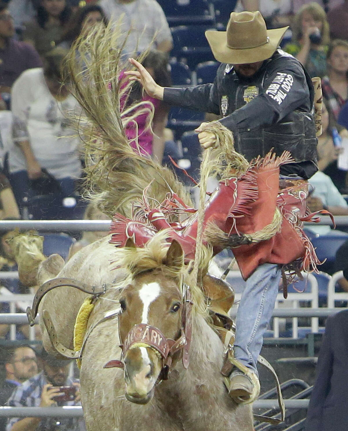 Sam Kelts of Millarville, AB is bucked off from a saddle bronc during the RodeoHouston at the Houston Live Stock and Rodeo in NRG Stadium Monday, March 14, 2016, in Houston.