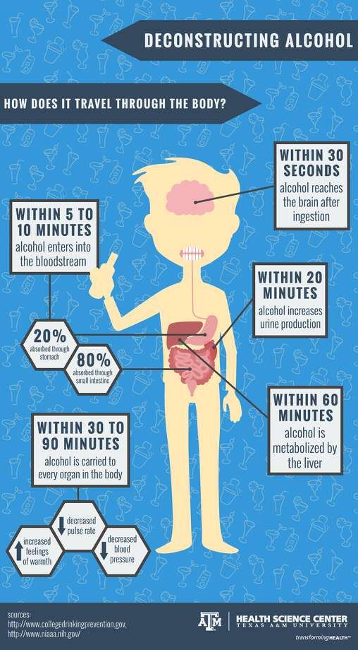 The Texas A&M University Health Science Center has developed a graphic showing how quickly alcohol travels through the body.