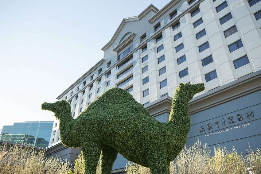 A topiary camel outside the new Camby Hotel in Phoenix is a playful reference to nearby Camelback Mountain, which also inspired the hotels name.