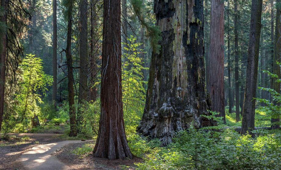 Stroll Calaveras Big Trees State Historic Park in solitude
