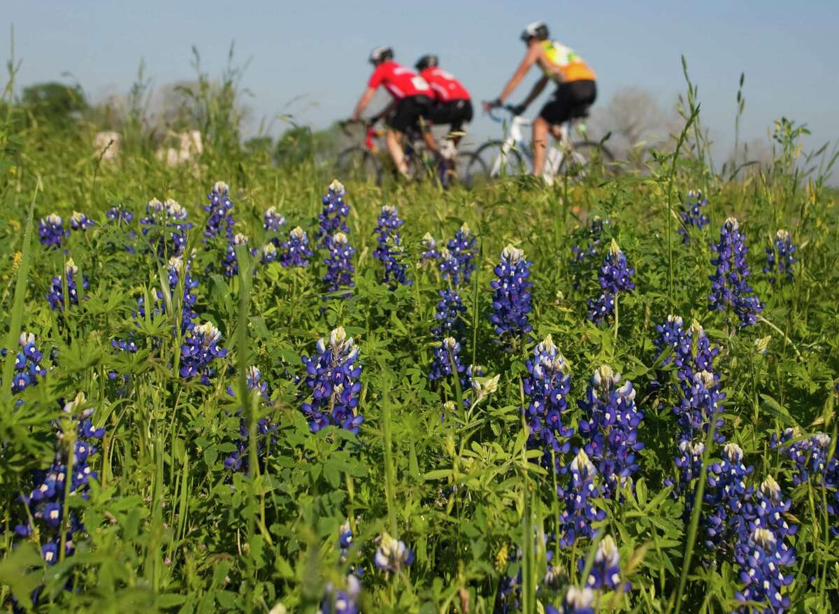 Biker pass a patch of bluebonnets off of FM 529 during the Bluebonnet Express bike ride on Sunday March 25, 2012 in Houston, TX.