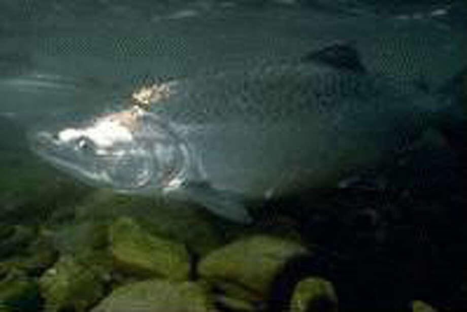 Photo: NOAA Fisheries