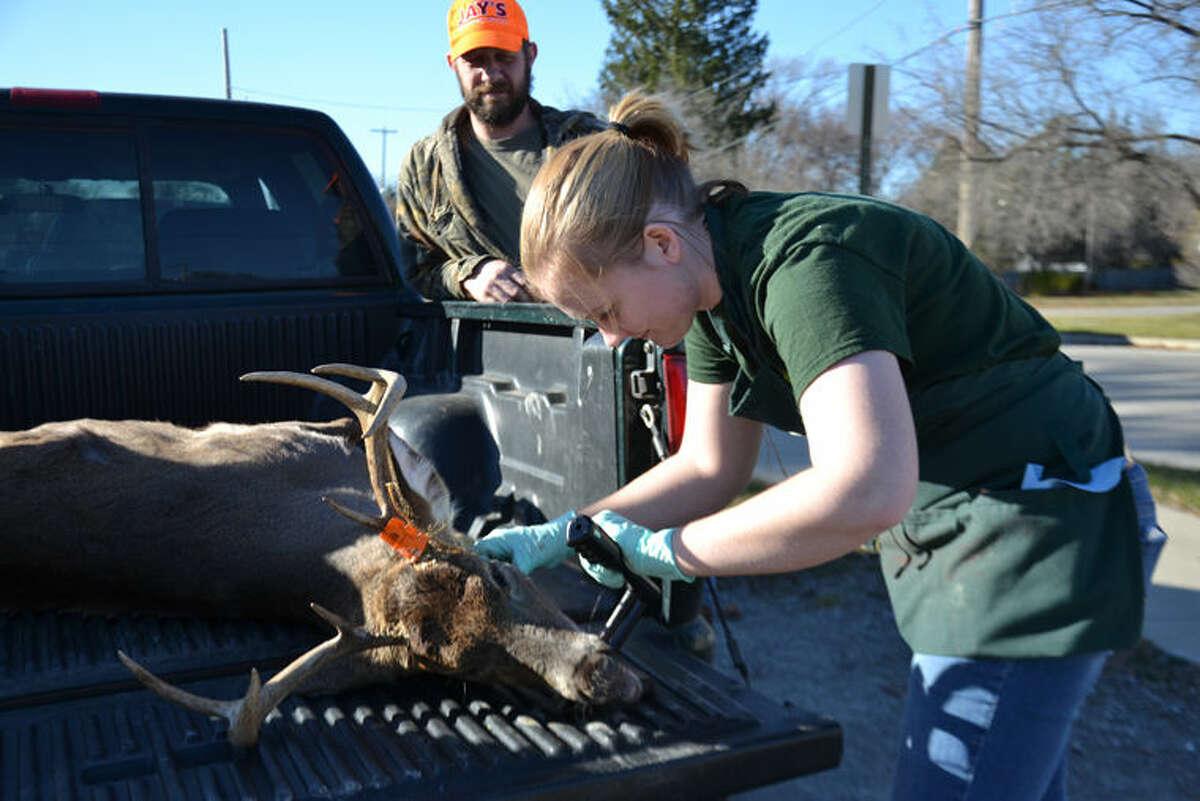 DNR employee Megan Baker examines the teeth of a seven-point buck taken by Melissa Walker of Gladwin on Sunday, the opening day of firearm deer season. Walker's husband, John, watches in the background.