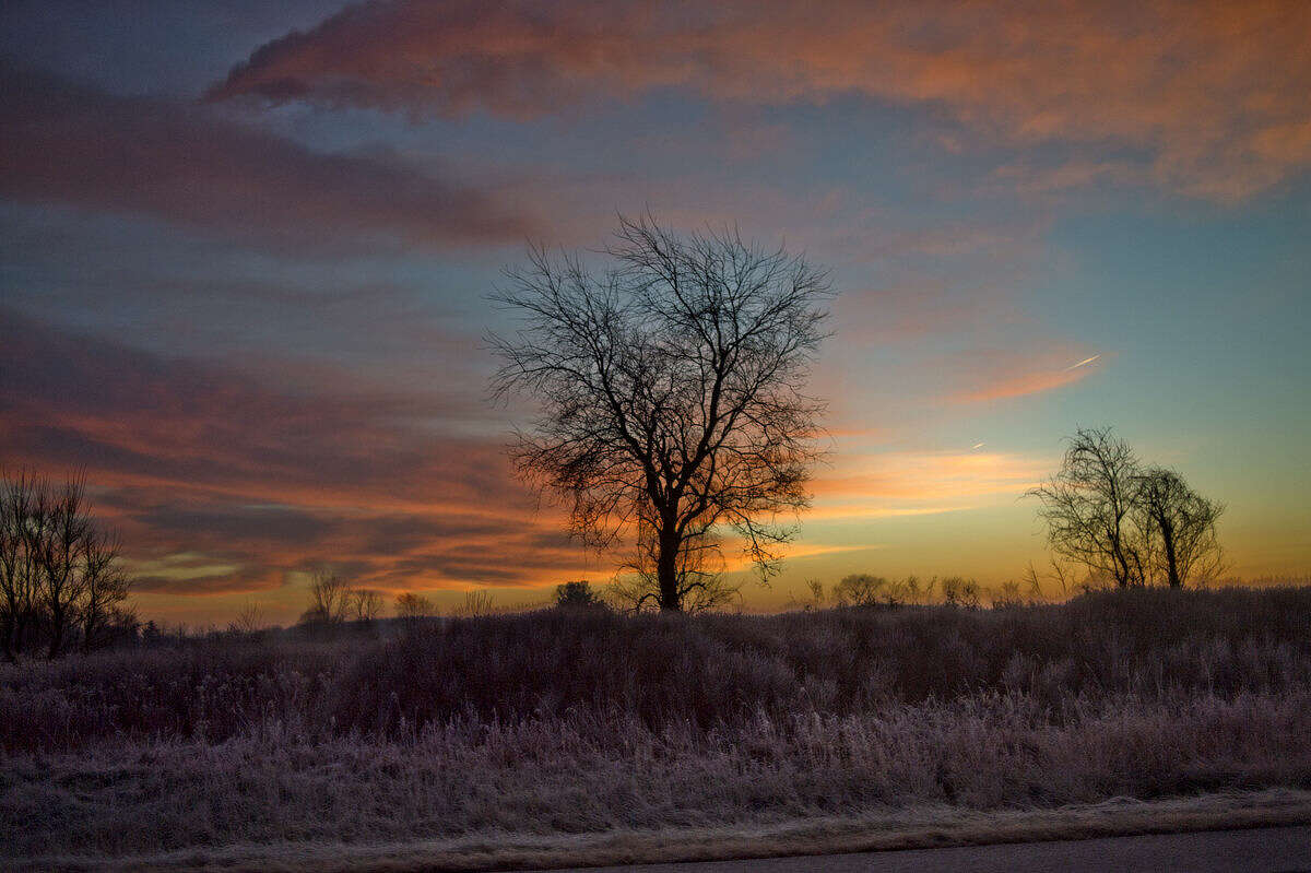 A layer of frost covers the grass below a tree which is silhouetted by the rising sun near Mount Pleasant on a recent morning.