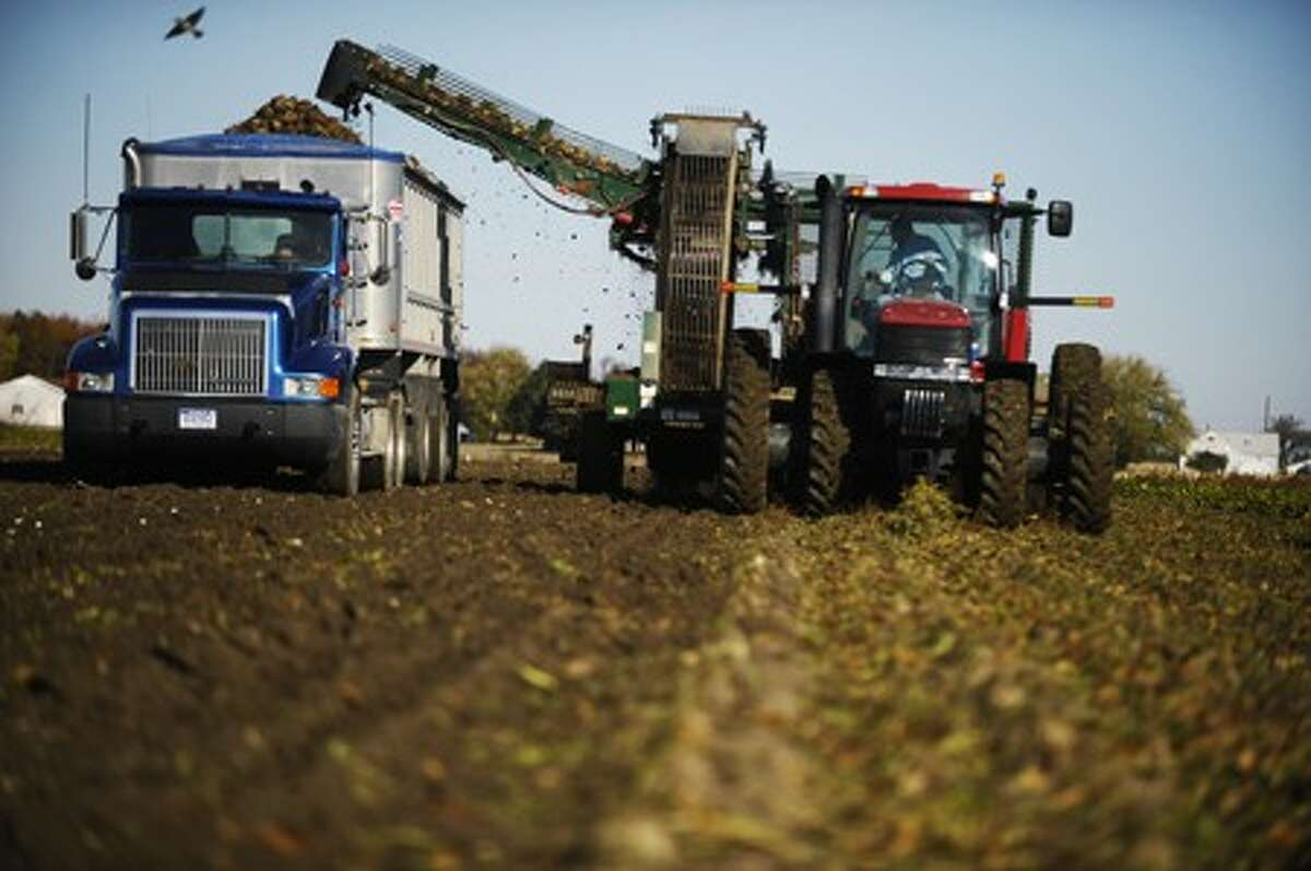 Sugar beets are harvested at an area farm in this Daily News file photo. Michigan Sugar Co. today announced that this year's harvest has wrapped up and a record crop was delivered by sugar beet farmers across the region.