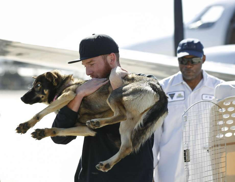 Conner Lamb carries Luna, who fell off a boat in February, after the German shepherd turned up at San Clemente Island, about 70 miles off San Diego. Photo: Hayne Palmour IV, AP