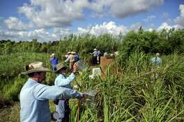 A reader is concerned that the herbicide the Texas Senate approved to eradicate carrizo cane along the border will harm the animals and people exposed to it.