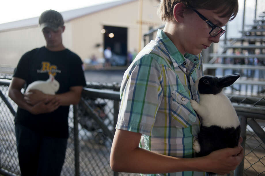 BRITTNEY LOHMILLER | blohmiller@mdn.net Fifteen-year-old Nathan Wallace of Midland holds his Netherlands dwarf rabbit and 14-year-old Sam Krolikowski of Midland pets his Dutch rabbit, Tater Tot, while waiting to show in the small animal auction. Krolikowski won grand champion open show, grand champion youth show and Midland County special for his Dutch rabbits. Photo: Brittney Lohmiller/Midland Daily News