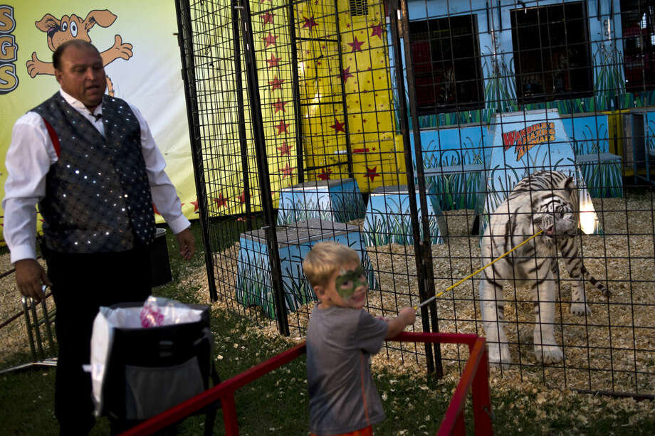Jacoby Kocot, 3, of Pinconning, feeds a tiger as Wambold's Amazing Animals performer Robert Moyer of Sarasota, Fla., looks on at the Midland County Fair on Thursday in Midland. The show, which was geared towards children, featured camels, tigers and even a liger. Photo: Erin Kirkland | Ekirkland@mdn.net