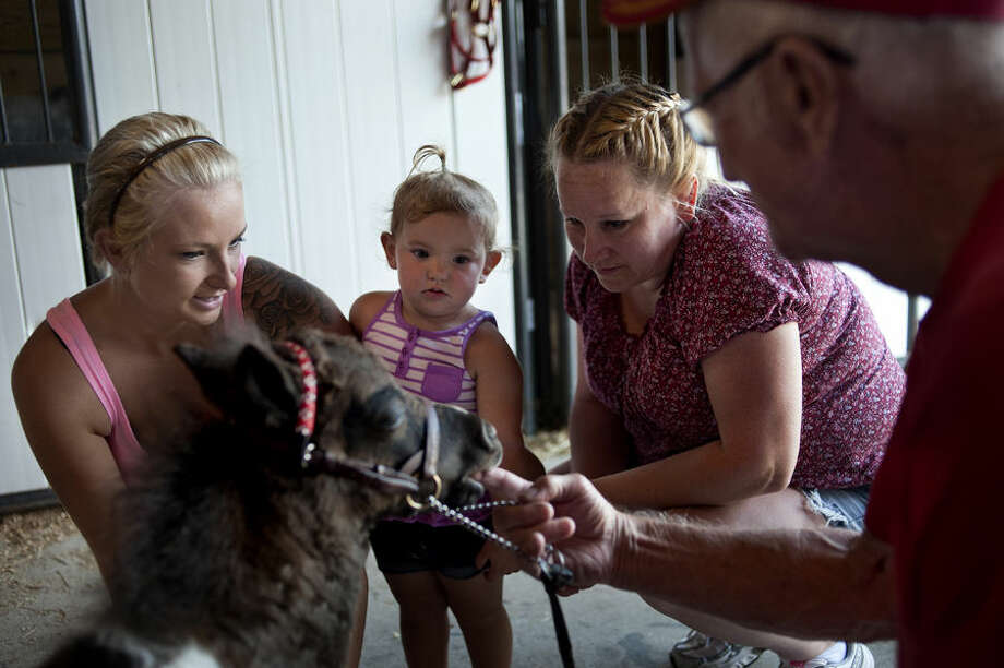 BRITTNEY LOHMILLER | blohmiller@mdn.net From left: Tabatha Mayhew, her 18-month-old daughter Payton Mayhew and mother Konnie Mayhew, all of Coleman, watch Naughty Nate, a 1-month-old miniature horse, nibble on Nate Root's finger during the Midland County Fair. Root's daughter, Becky Cook, owns Naughty Nate. Photo: Brittney Lohmiller/Midland Daily News