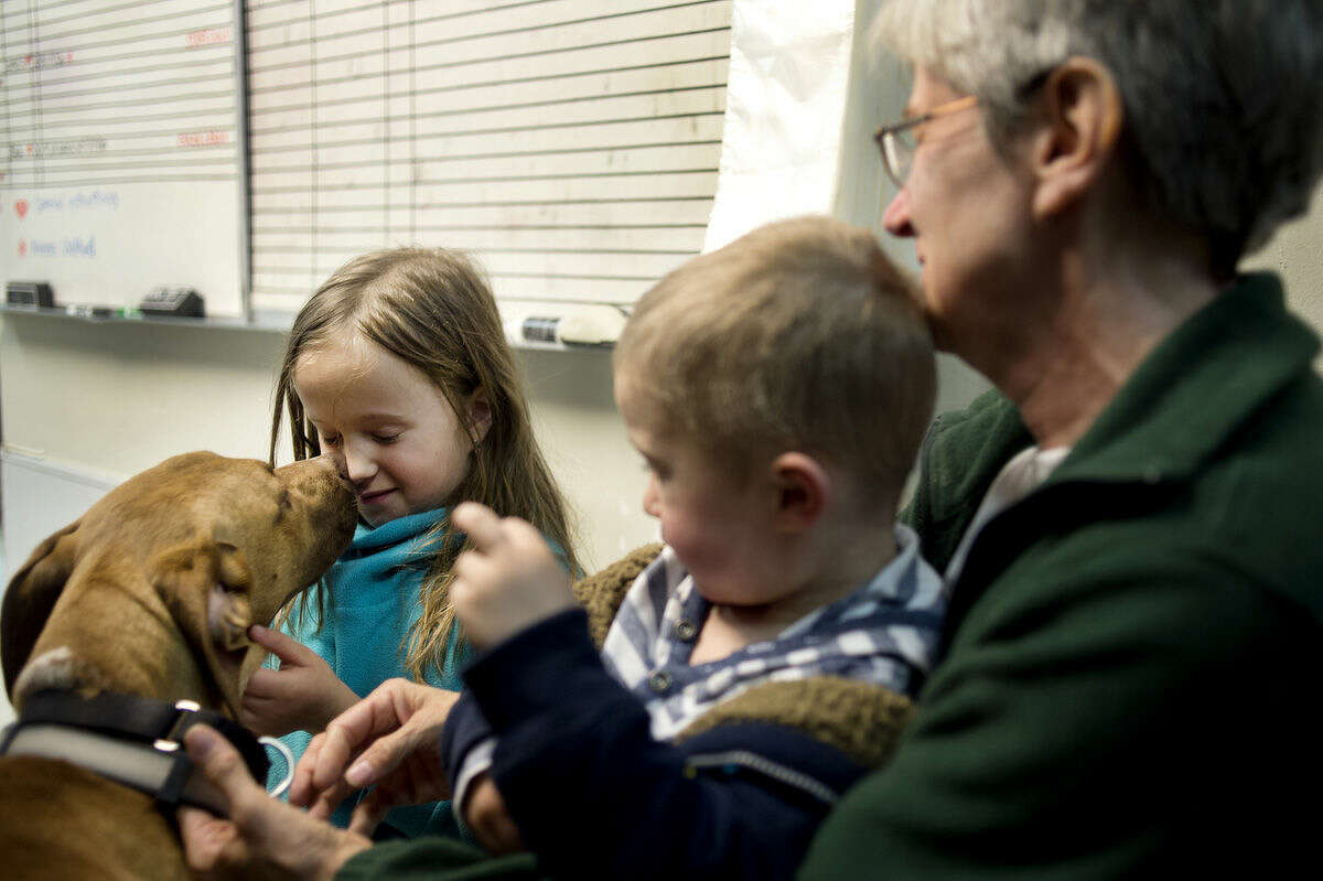 Labrador and chow mix, Tut, gives 8-year-old Natalie Glas, of Kalamazoo, a kiss while Caleb Glas, 2, of Kalamazoo, and Donna DuBois, of Sanford, pet the dog Tuesday afternoon. DuBois, a volunteer at the animal shelter, brought her grandchildren to visit and play with the animals during their visit to Midland.