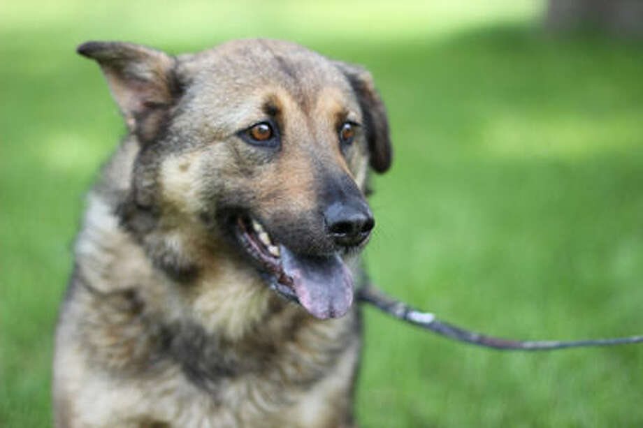 Roxy will be returning home after 9 months in Midland. Photo: Photo Provided