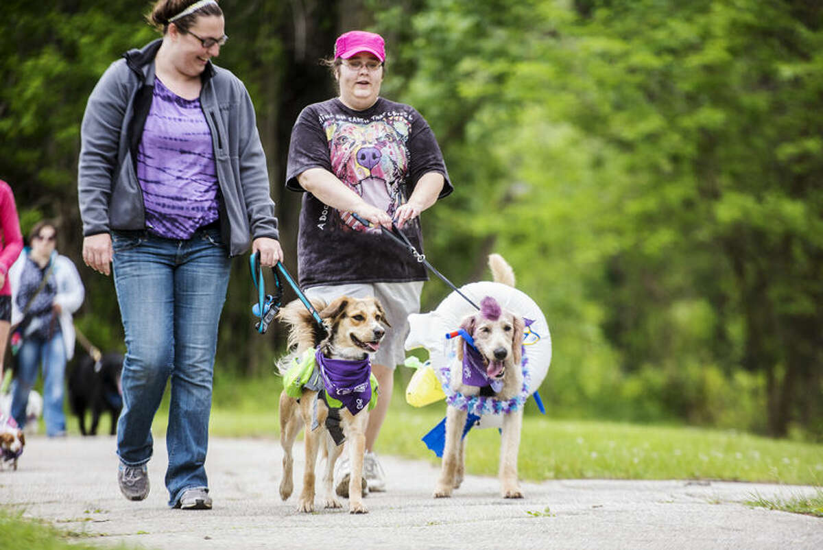 """Megan Barnard of Midland, right, walks with her rescue dog Bailey and Nicole Trongo of Harbor Beach walks her Labradoodle Tucker at the Bark for Life of Midland County in Chippewassee Park in Midland on Saturday. Trongo dressed Tucker in swimming gear and colored his mowhark purple for the event, which included a costume contest. Purple, the color of Relay for Life, represents every type of cancer. """"I'm here to honor my dad (the Rev. David Birnbaum) who died last August,"""" Barnard said."""