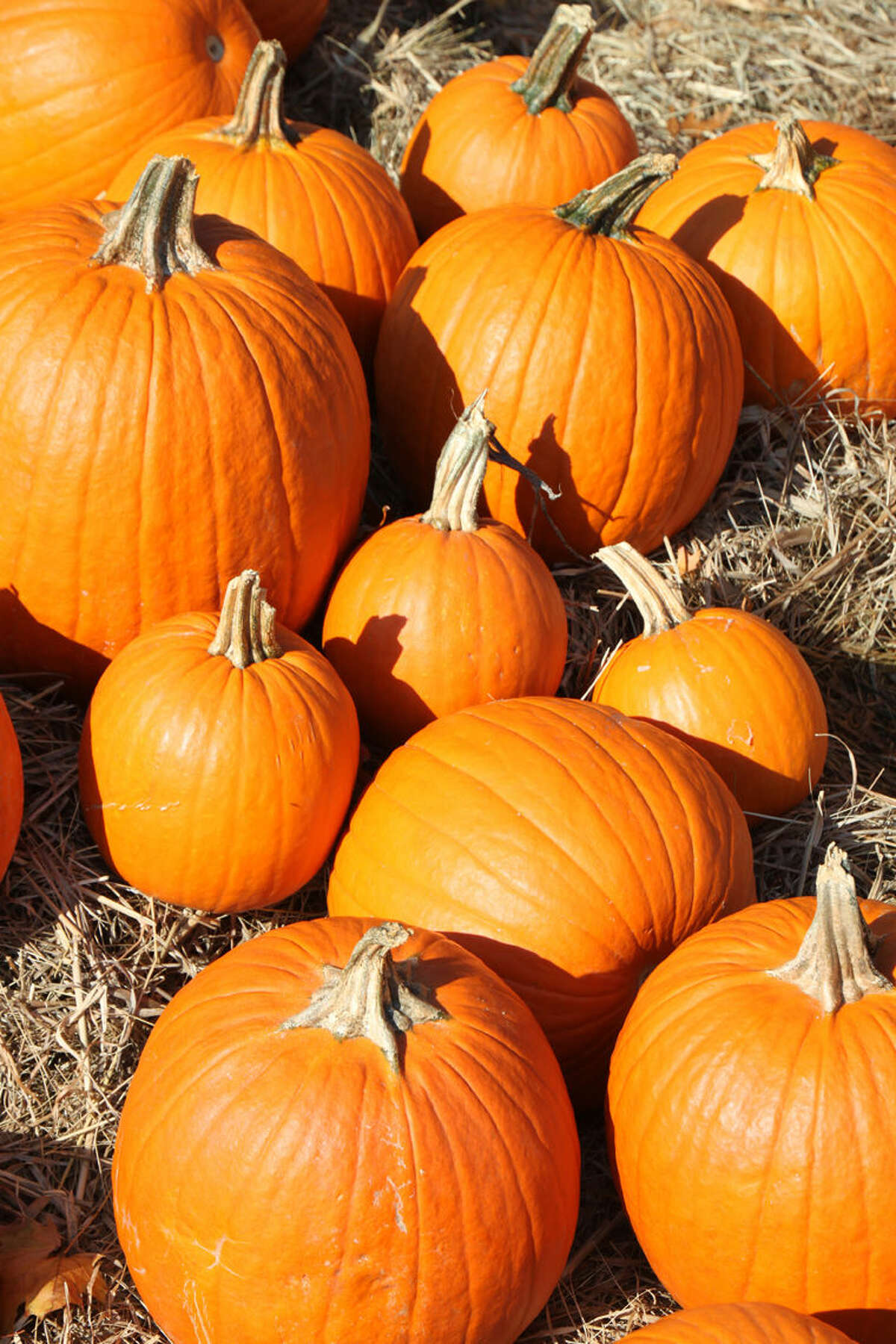 When looking for suitable pie pumpkins avoid bruises, cracks and soft spots.